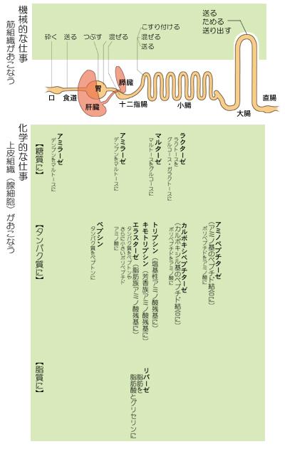 機械的仕事と電磁気力04