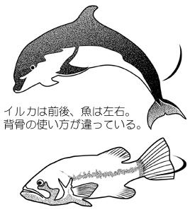 image_016