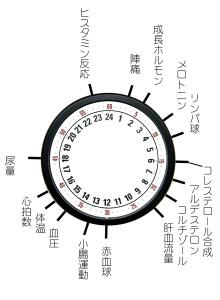 体内時計01