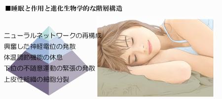 睡眠と進化01