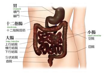 腸の様子02a